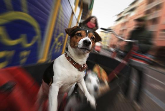 Amsterdam-perro-2