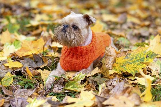 Dog and autumn.