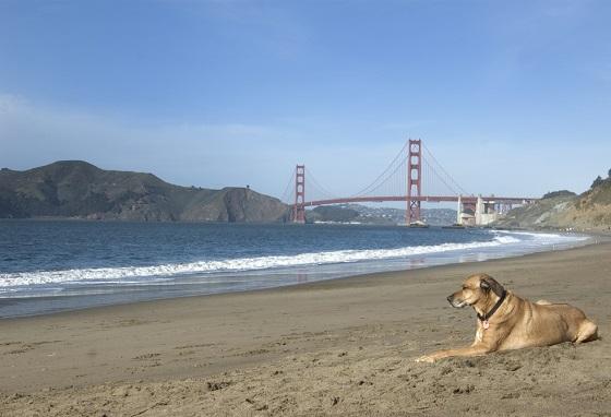 Perro-San-Francisco