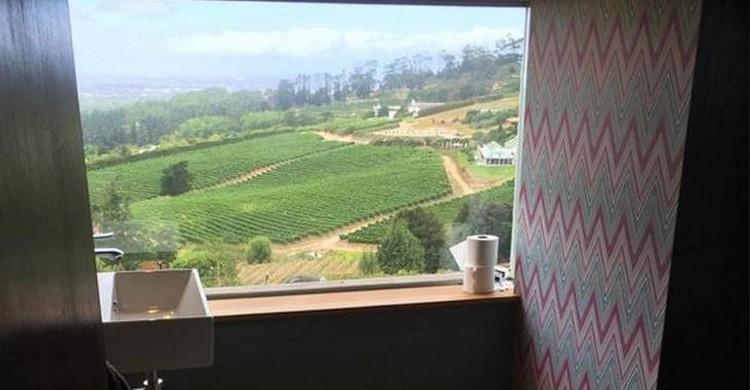 Vignes Afrique du Sud - recreoviral
