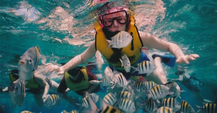Plongée sous marine - publicdomainpictures