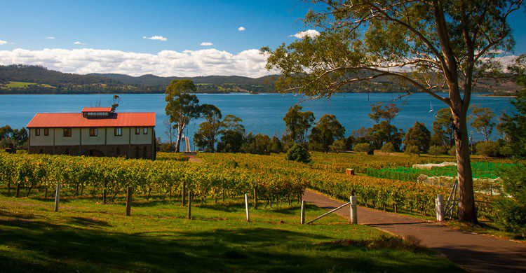 Tasmanie - Steven Johnson