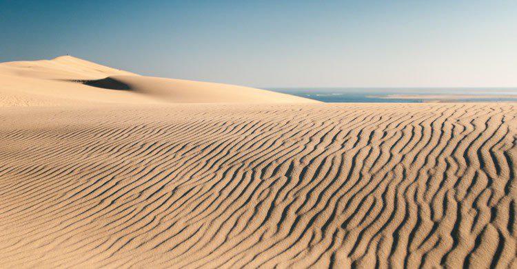 Dune du Pilat - Echinophoria