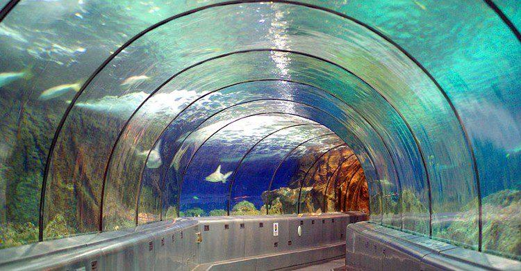Marineland pour les passionnés des fonds sous-marins