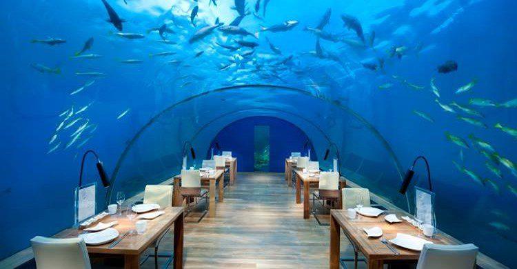 Ithaa Undersea Restaurant - Facebook