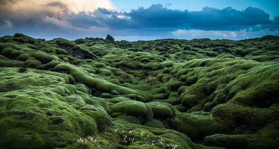560-Andre--s-Nieto-Porras-Mugo-de-Iceland
