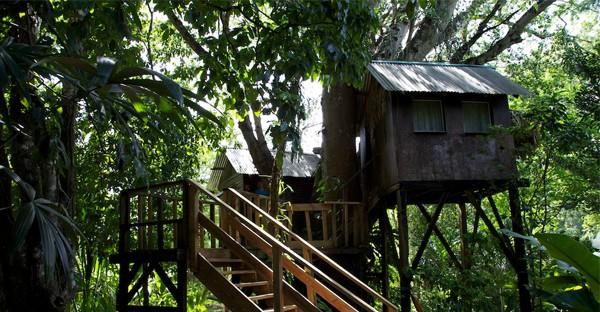 Hôtel - Parrot Nest Lodge
