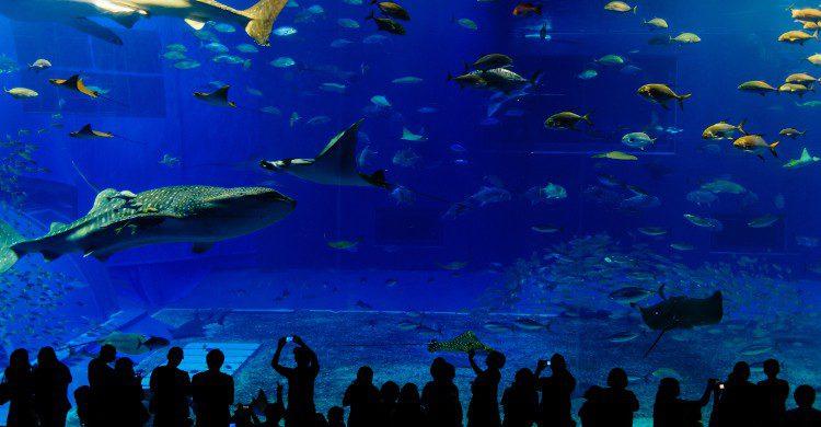 Vivez l'immersion totale dans Oceania