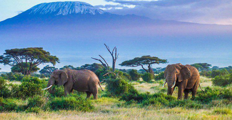 Partez à la découverte de l'Afrique - Istock