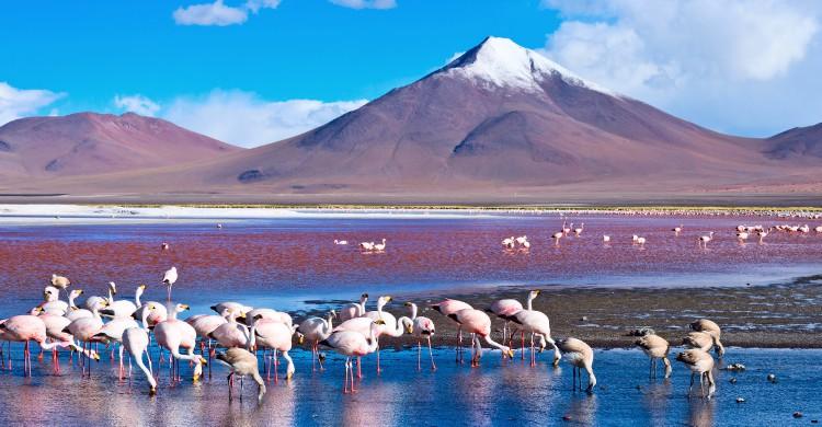 Cordillera Apolobamba en Bolivie Cette course est un plongeon dans la culture bolivienne. On se trouve ici sur le territoire des Kallawaya. Suivant d'anciens chemins incas, le marcheur longe le flanc d'Apolobamba (entre 4000 et 5000m d'altitude). Un guide est obligatoire pour effectuer ce chemin de 5 jours. La beauté du paysage est à couper le souffle : d'un côté les glaciers, de l'autre la forêt amazonienne. Alors, oui ce parcours est loin de la simple promenade de santé, mais si vous vous montrez assez courageux pour tenir jusqu'à l'arrivée, vous pourrez profiter des eaux thermales de Pelechuco. Quoi de meilleur qu'un bon bain après un si long voyage ?