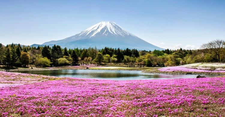 L'Ultra-Trail du mont Fuji au Japon Cette course, créée en 2012 est déjà en passe d'être une des plus célèbres au monde. Vous avez 46h pour effectuer un parcours de 168km et 9500m d'ascension. L'épreuve a lieu en début avril. Le début du printemps ajoute toutefois une difficulté : la météo ! Il se peut que vous deviez affronter vent, pluie et parfois neige à certains endroits du parcours. Si vous ne vous sentez pas de faire la course dans son entièreté, l'organisation propose un demi-tour de 88km.