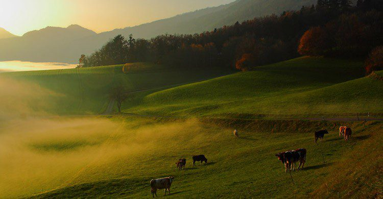 Vaches Suisse (Flickr)