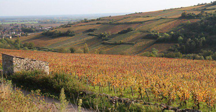 Bourgogne (Flickr)