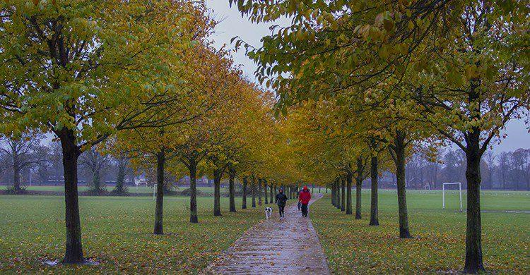 Vacances Toussaint, automne (Flickr)