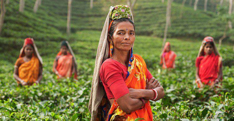 Femme plantation de thé (Pixabay)