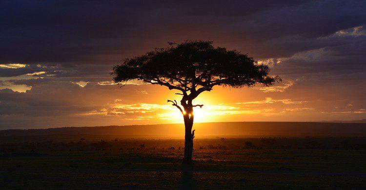 Paysage Afrique (Pixabay)