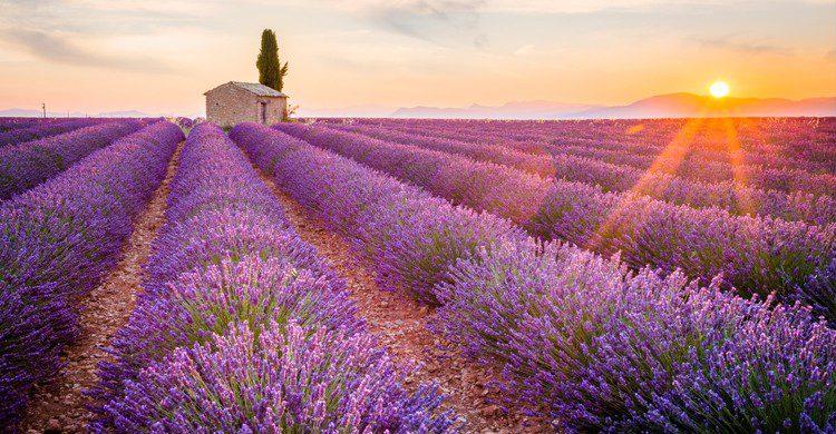 Paysages de la Provence (Istock)