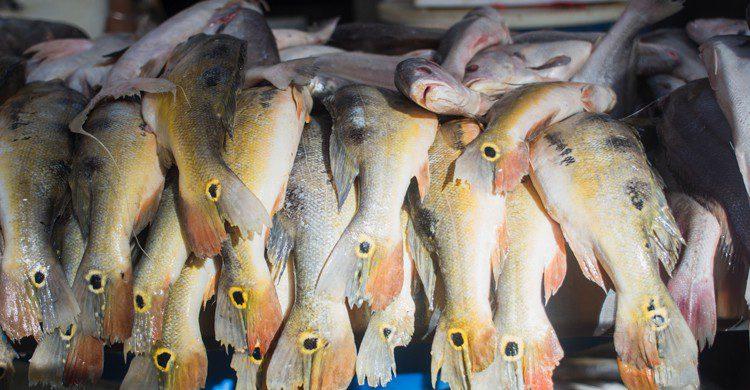 poisson mis à la vente dans un marché