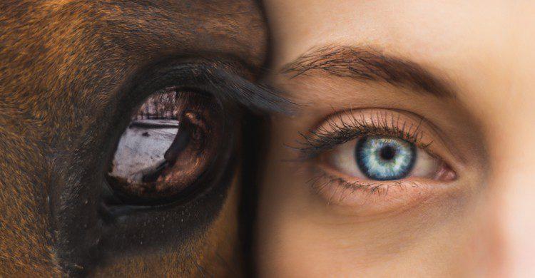 gros plan sur l'oeil d'un cheval et celui d'une femme côte à côte